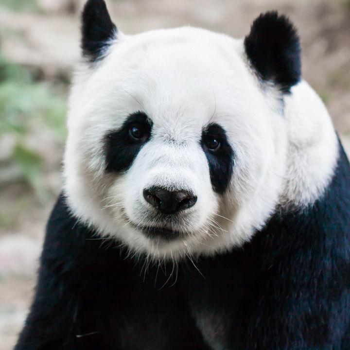 東京の動物園。展示している生き物の種類や施設情報、ふれあい体験など