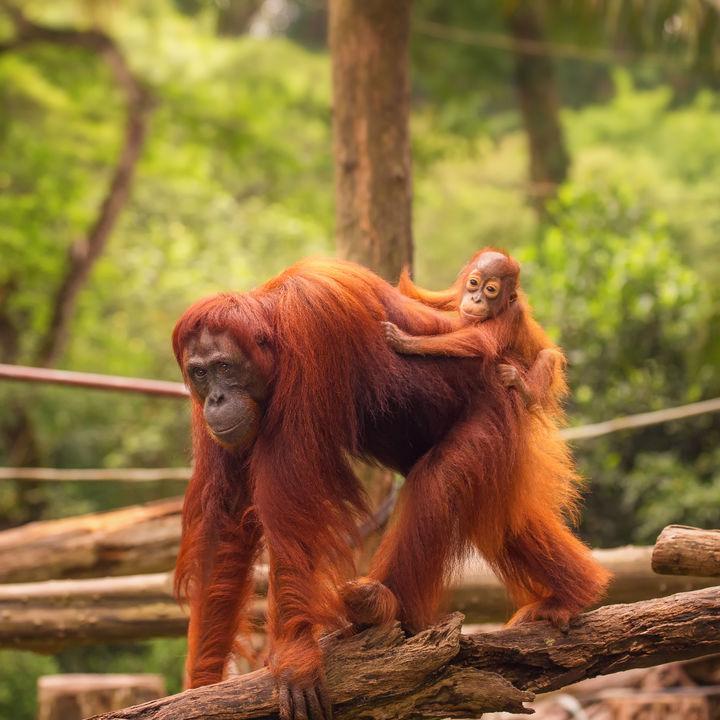横浜周辺でさまざまな種類の生き物を飼育している動物園。珍しい生き物をたくさん見よう