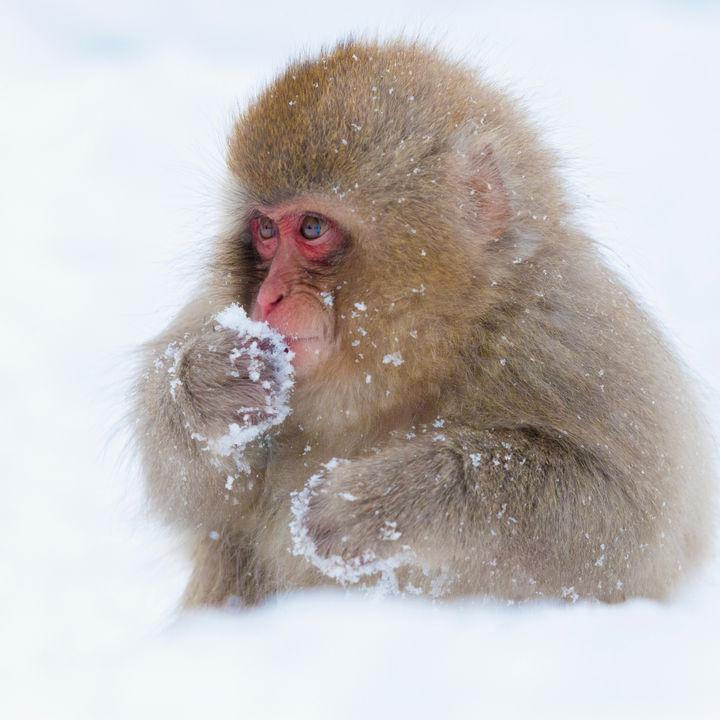 クリスマスシーズンに楽しめる!北陸の動物園