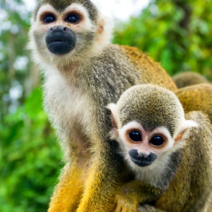 神奈川周辺でさまざまな種類の生き物を展示している動物園