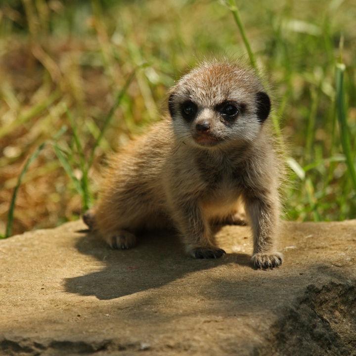 静岡県のさまざまな種類の生き物を飼育している動物園