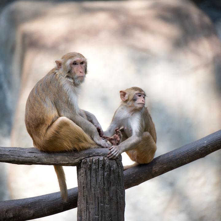 北陸周辺で猿に会える動物園。動物たちの生活を間近で見れる、子連れにおすすめのスポット
