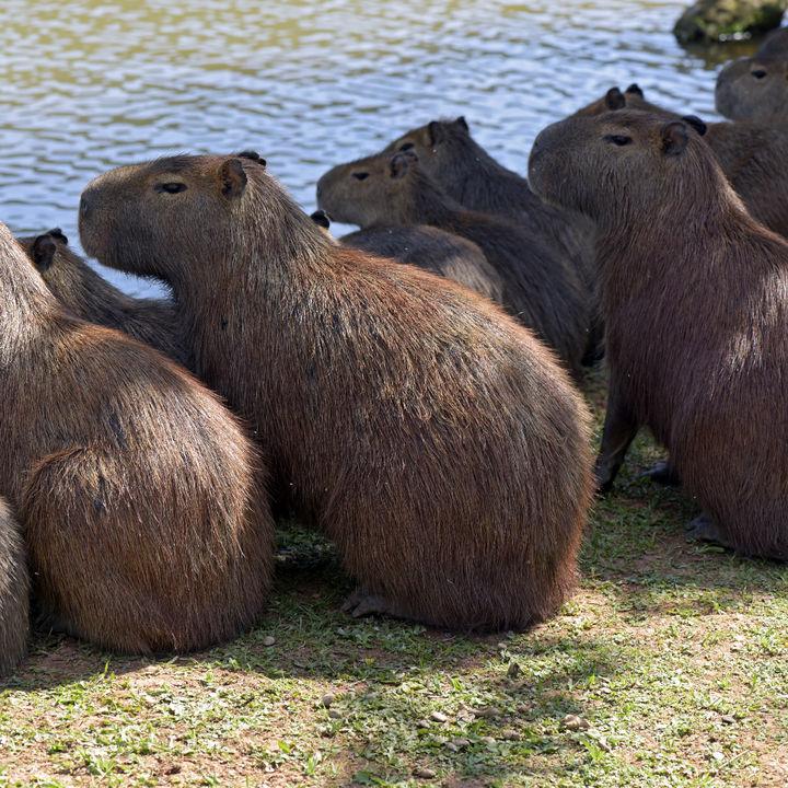 静岡県のカピバラに会える動物園。見たり餌やりを楽しもう