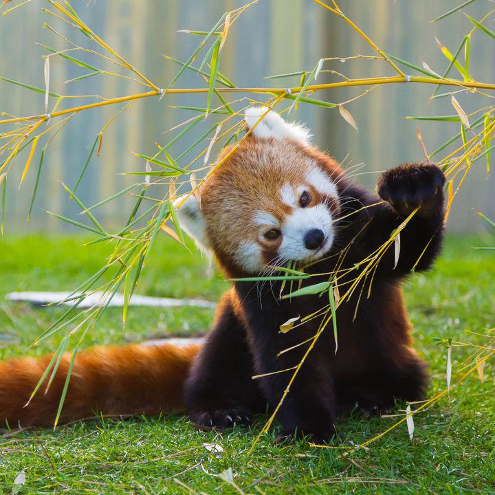 関東で正月に営業している動物園。冬休みに動物とふれあおう