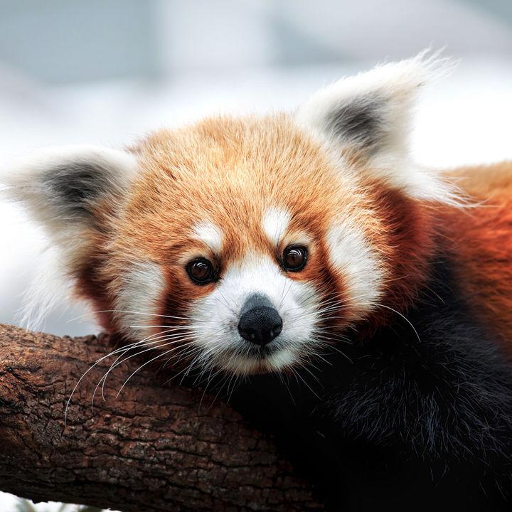 生き物へのえさやりが楽しめる!関東でおすすめの動物園