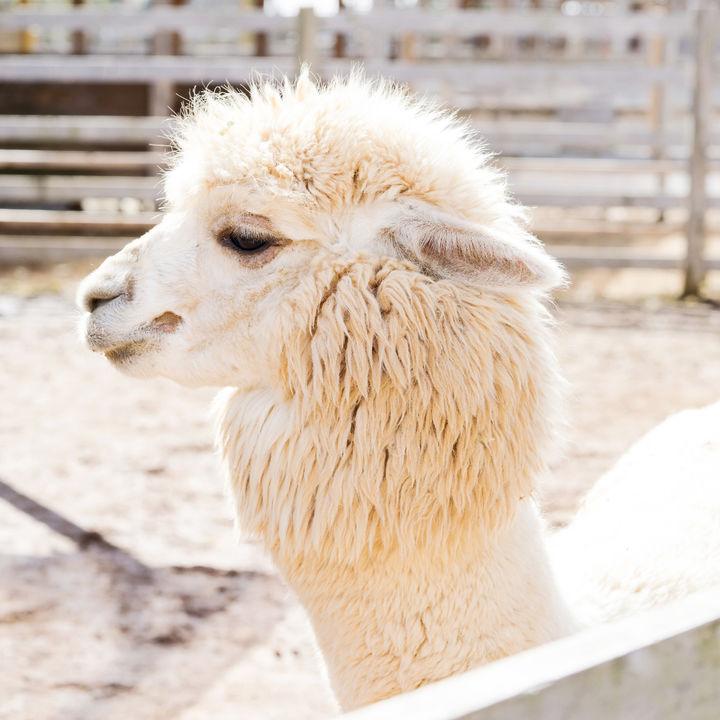 関東でさまざまな体験が楽しめる動物園。子どもとふれあいやエサやりを楽しもう