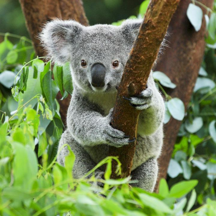 関東でさまざまな種類の生き物に出会える動物園
