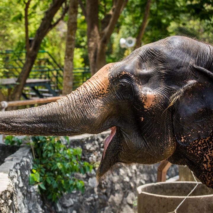 関東で赤ちゃん連れにおすすめの動物園。設備やベビーカーについて