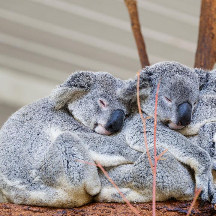 さまざまな生き物の展示が楽しめる!関西にある子連れにおすすめの動物園