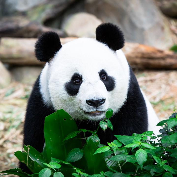 関西のイベントが行われる動物園。えさやりやふれあい体験など