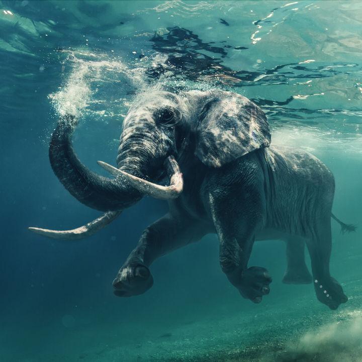 関西で象に会える動物園。子どもたちが大好きな大きくて長い鼻の象を見よう