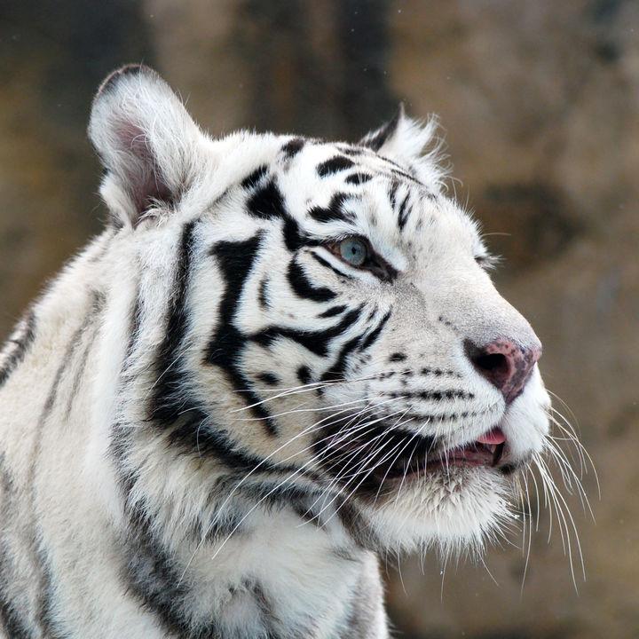 関西のさまざまな種類の生き物にたくさん出会える動物園