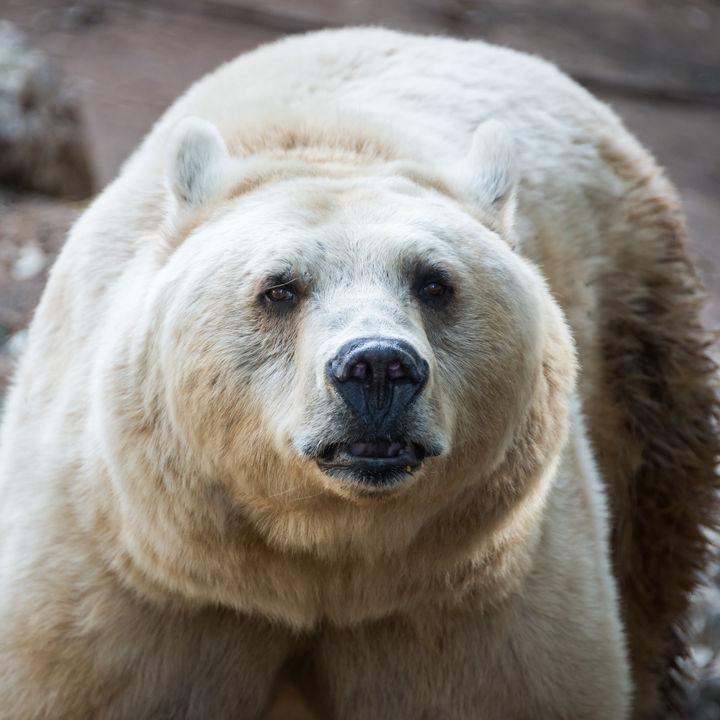 関東圏で、GW(ゴールデンウィーク)に親子で行きたい動物園は