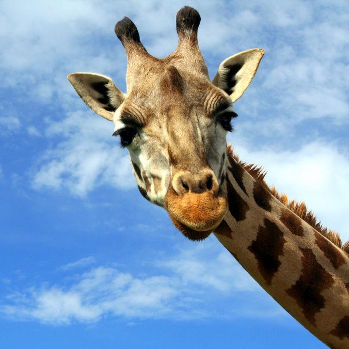 GW(ゴールデンウィーク)に子どもと行きたい神奈川周辺の動物園