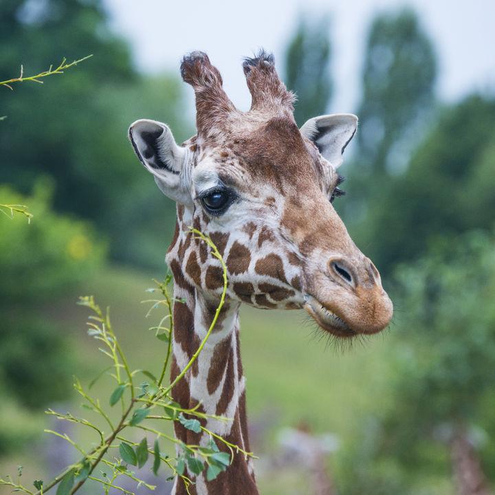夏休みのお出かけに。子どもと行きたい神奈川周辺のおすすめ動物園