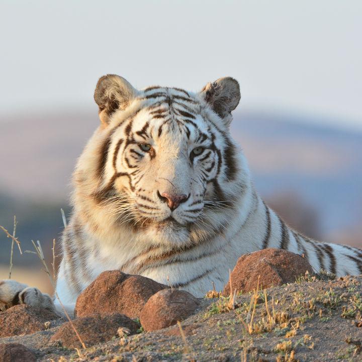 関西のさまざまな生き物を飼育している動物園。イベントやふれあい体験など