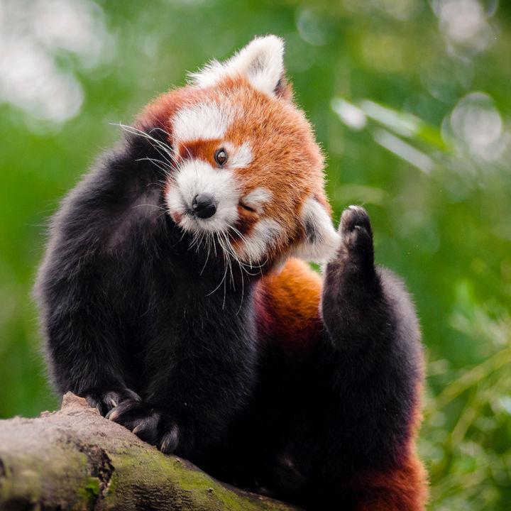 冬に行きたい関西の動物園。体験イベントや動物の種類など