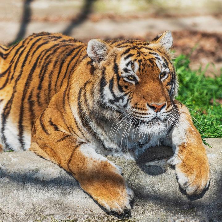 関西のさまざまな種類の動物に会える動物園