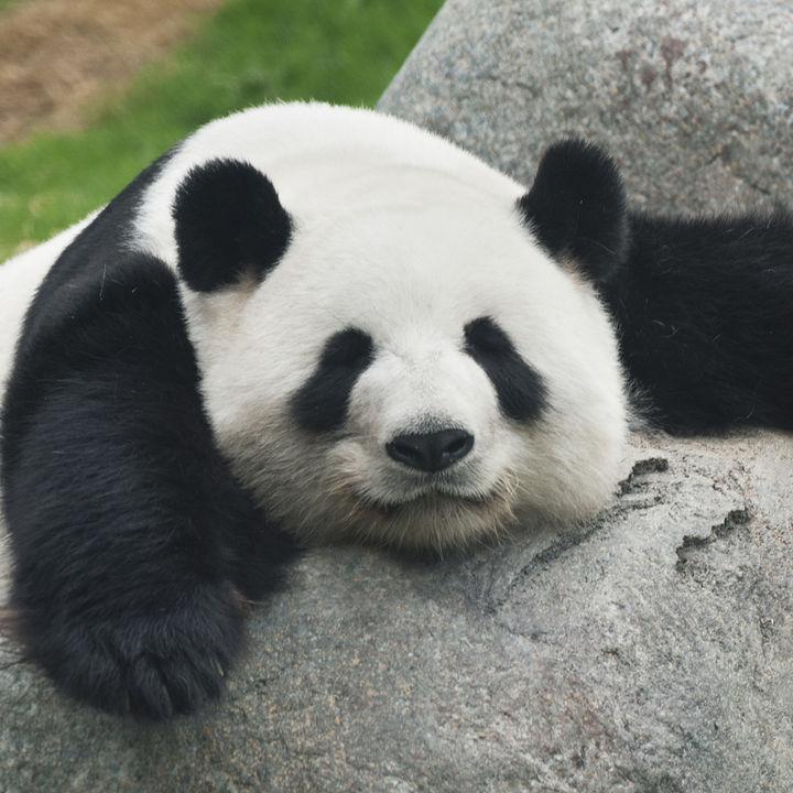 夏休みに子どもと行きたい兵庫の動物園。生き物観察やエサやり体験などを楽しもう