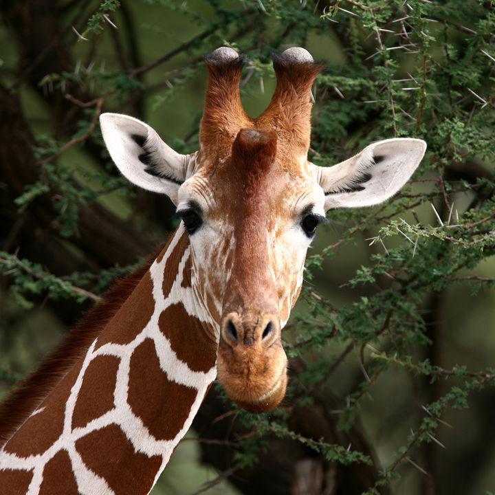 GWに行きたい静岡県の動物園。ふれあい体験やイベントなど、親子で休日を楽しもう