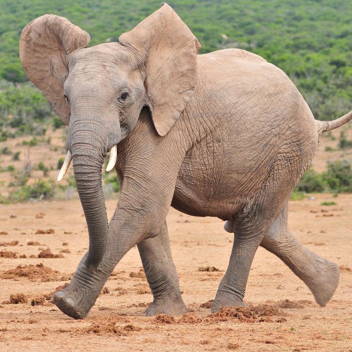 静岡県周辺の象に会える動物園。大きくて長い鼻の象に子どもと会いに行こう