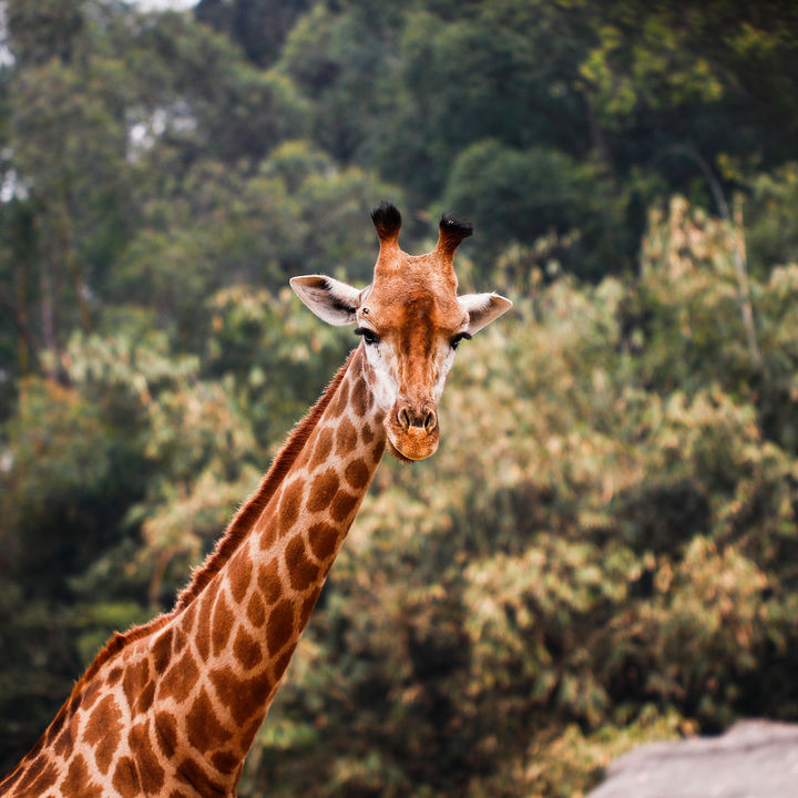 静岡県周辺でキリンに会える動物園はどこ?長〜い首のキリンを子どもと見に行こう