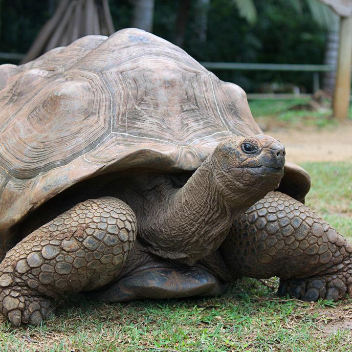 静岡県周辺で亀に会える動物園は。子どもといっしょに週末を楽しもう