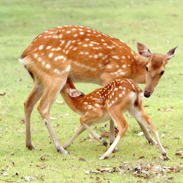 長野で鹿に会える動物園。家族でかわいい鹿を見に行こう