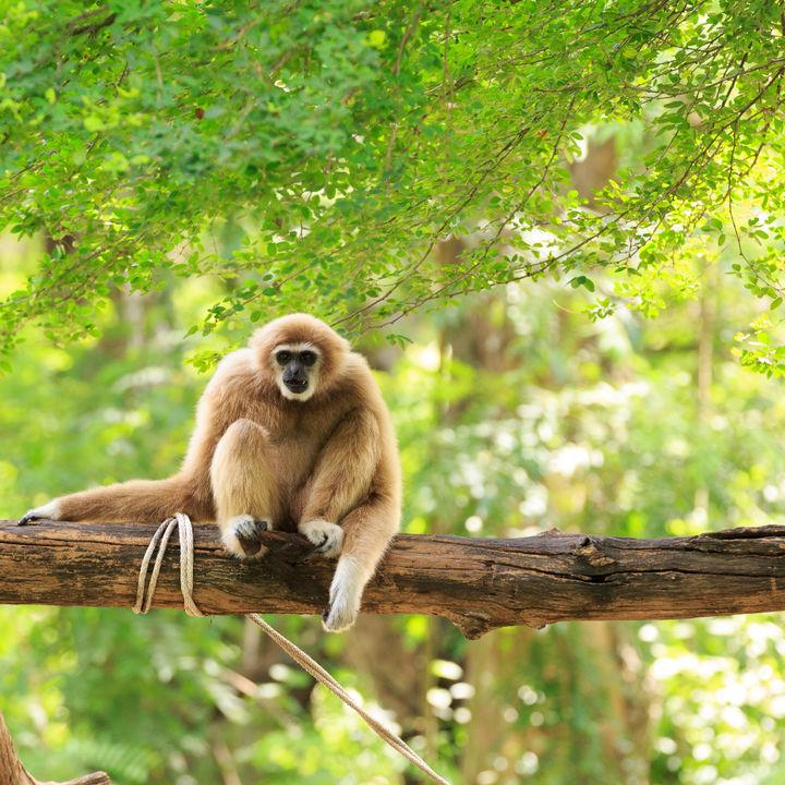 親子のおすすめにおすすめ!横浜周辺で猿に会える動物園