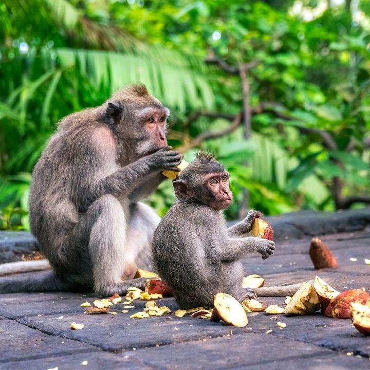 東京でさまざまな猿に会える動物園で日本/海外の猿をたくさん見に行こう
