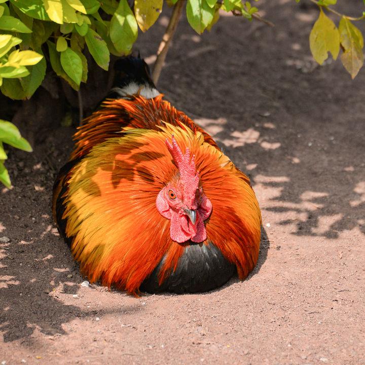 親子で楽しめる!岡山周辺のさまざまな種類の動物に出会える動物園