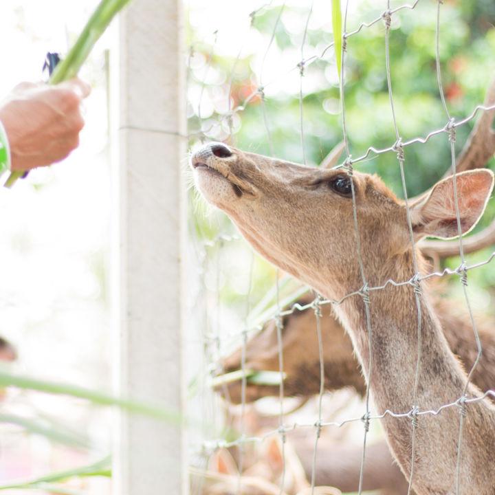 都内周辺の動物園で鹿に会えるスポットはある?家族のおでかけにおすすめのスポット