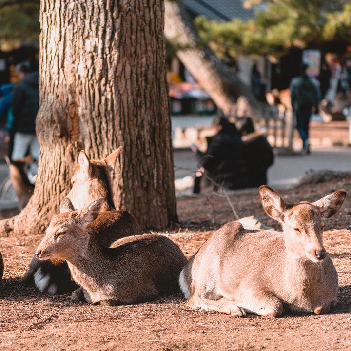 関東の鹿に会える動物園。子どもといっしょに休日のおでかけを楽しもう