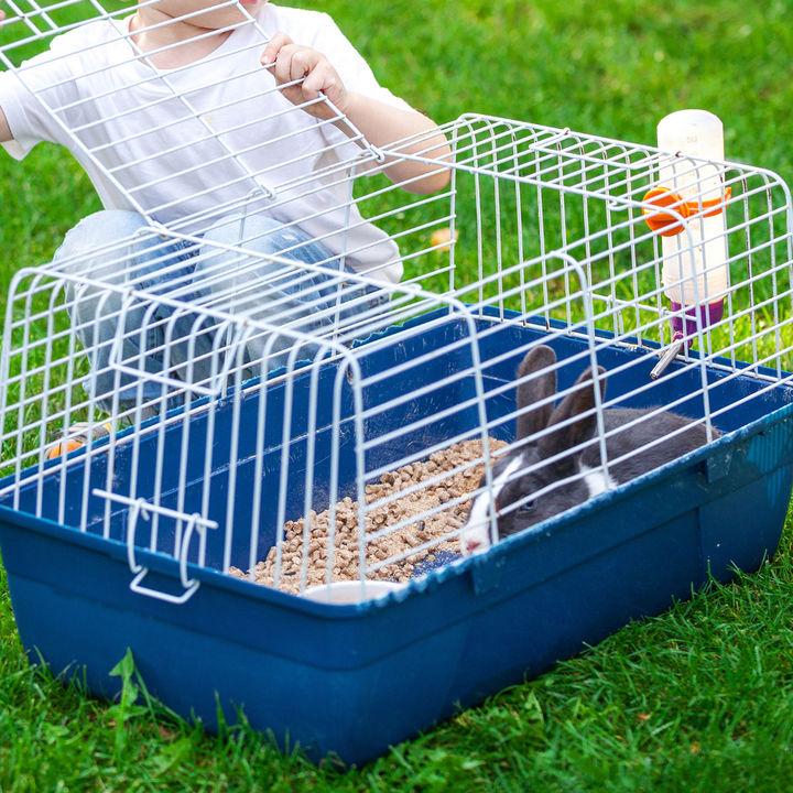 ペットのケージを手早くきれいに。簡単に掃除できる方法、便利なアイテムなど