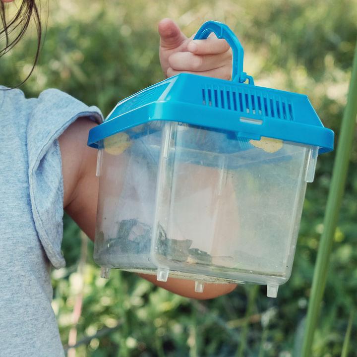 昆虫採集のトラップはなにがよい?ライトトラップなどの作り方と昆虫採集のポイント
