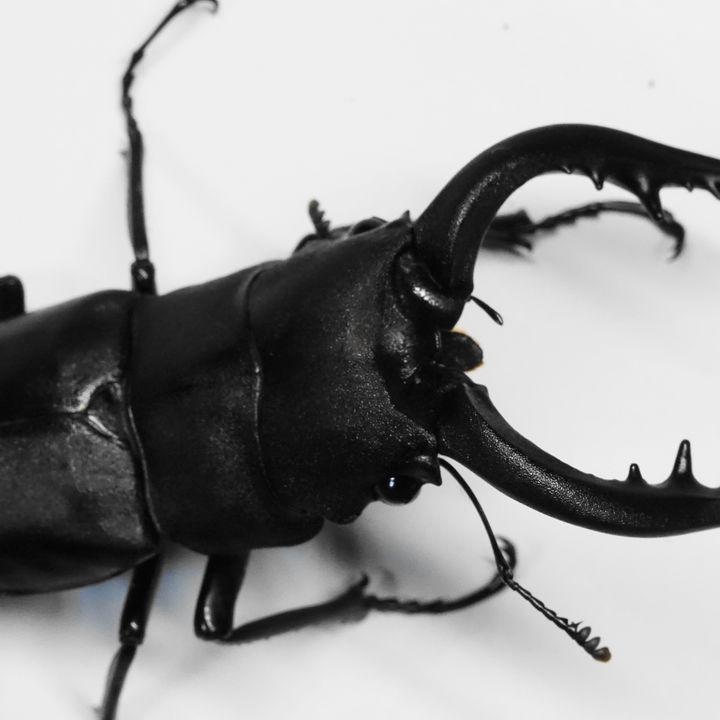 クワガタの幼虫や成虫の育て方。土や水、簡単なコバエ対策や秋から始める越冬の準備