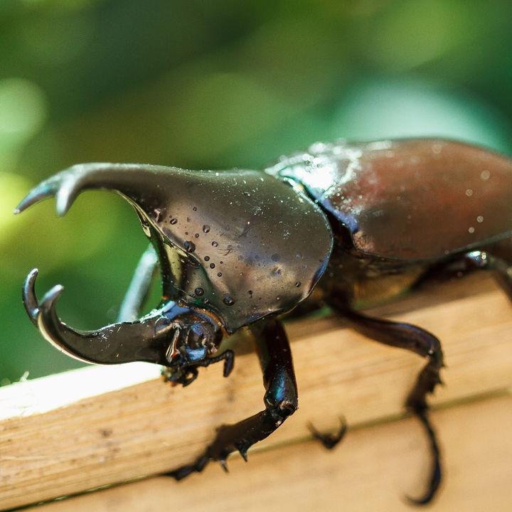 カブトムシの飼育ケースの大きさはどの程度?ケースを自作する方法と水滴対策、掃除など