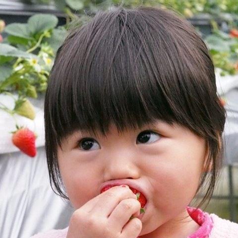 1月5日はいちごの日。旬のおいしさを味わう、いちご狩りの魅力
